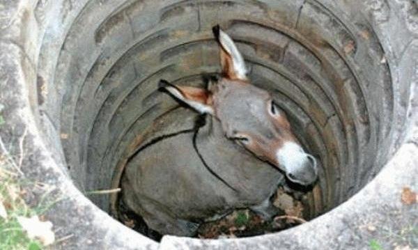 L'âne et le puits : Secouez-vous !