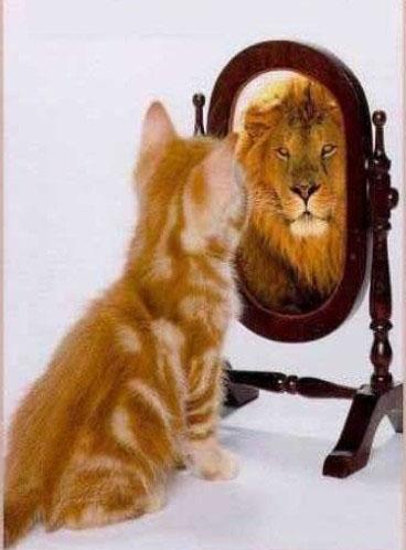 Confiance en soi - Chat lion miroir