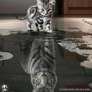 Chat qui se voit comme un tigre